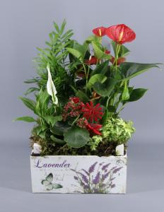 Caja de plantas verdes con anturio rojo