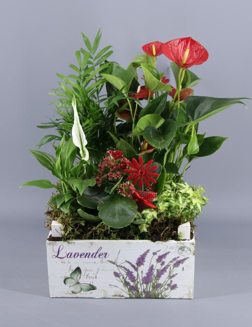 Caja plantas exoticas
